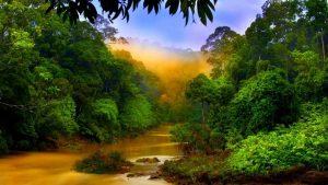 Aegis of Kalimantan